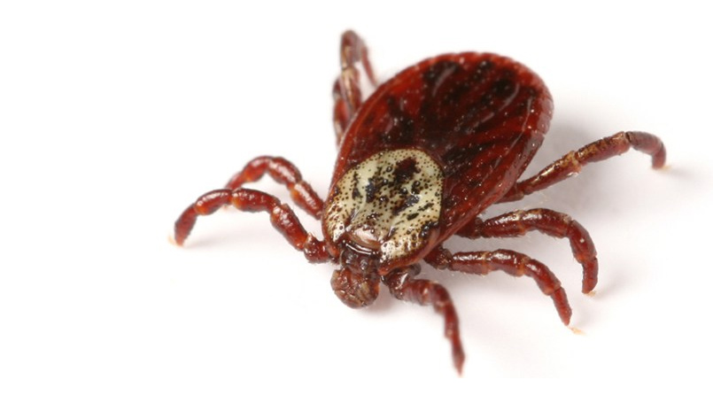 6 Early Symptoms of Lyme Disease | Beaumont Health
